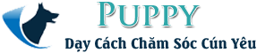 Puppy – Nhân Giống Chó – Chăm Sóc Chó Con – Huấn Luyện Chó Con